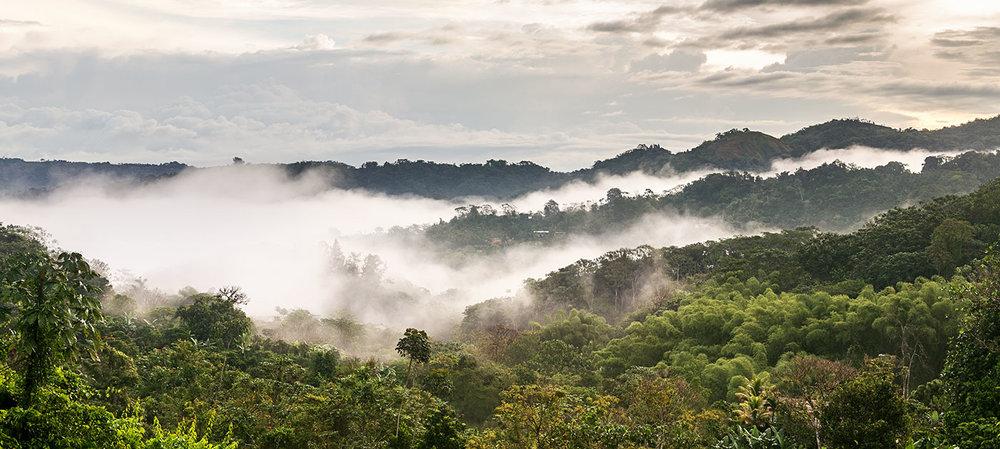 Neblina en Maricao, Puerto Rico  f/10