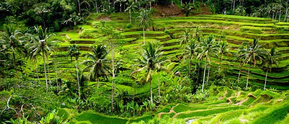 tegalalang-rice-terrace-ubud-bali.jpg