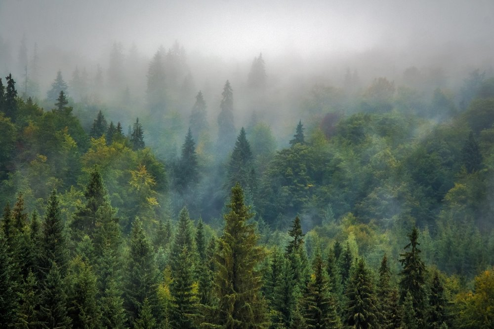 landscape,trees,wood,mist,forest