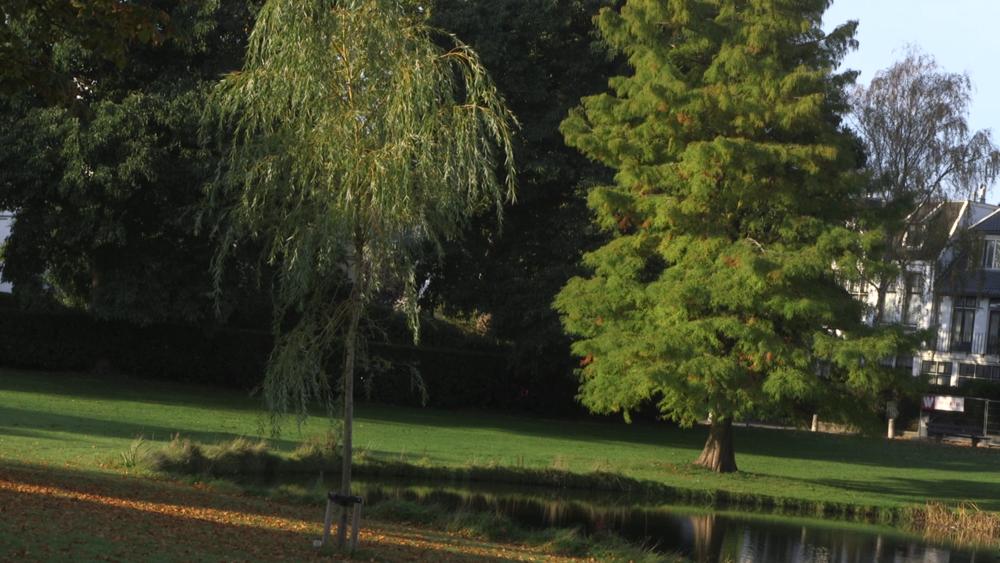 City, water, trees, birds, green