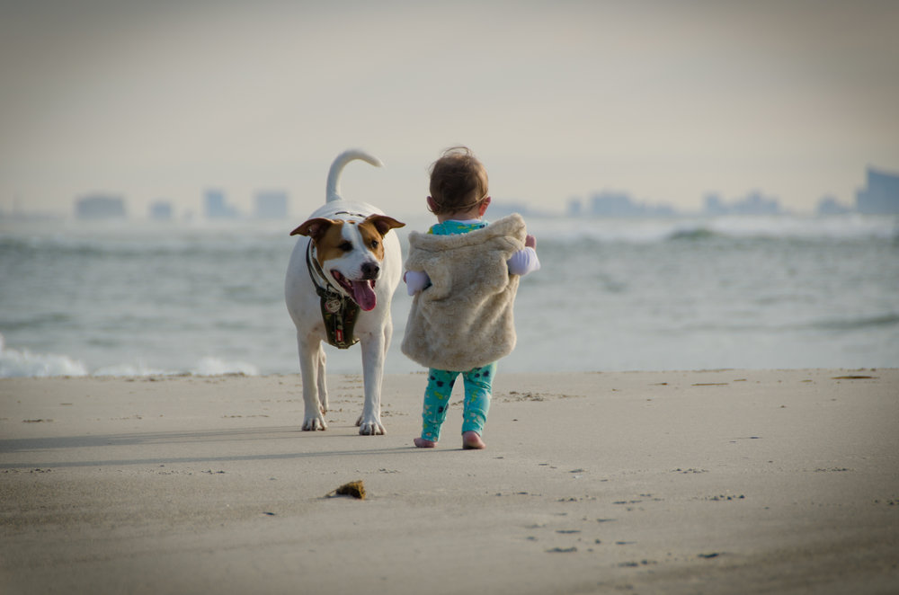 addie belle - jersey shore - shegotguts.com