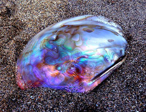 3e040b6576d5f7db32a4d42b3233014a--mother-of-pearls-abalone-shell.jpg