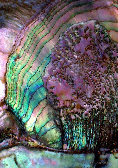 3fa478ef3a075f01a0c4788a92555196--paua-shell-abalone-shell.jpg