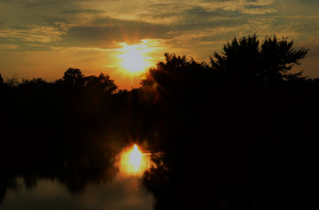 Suns; Grace Li