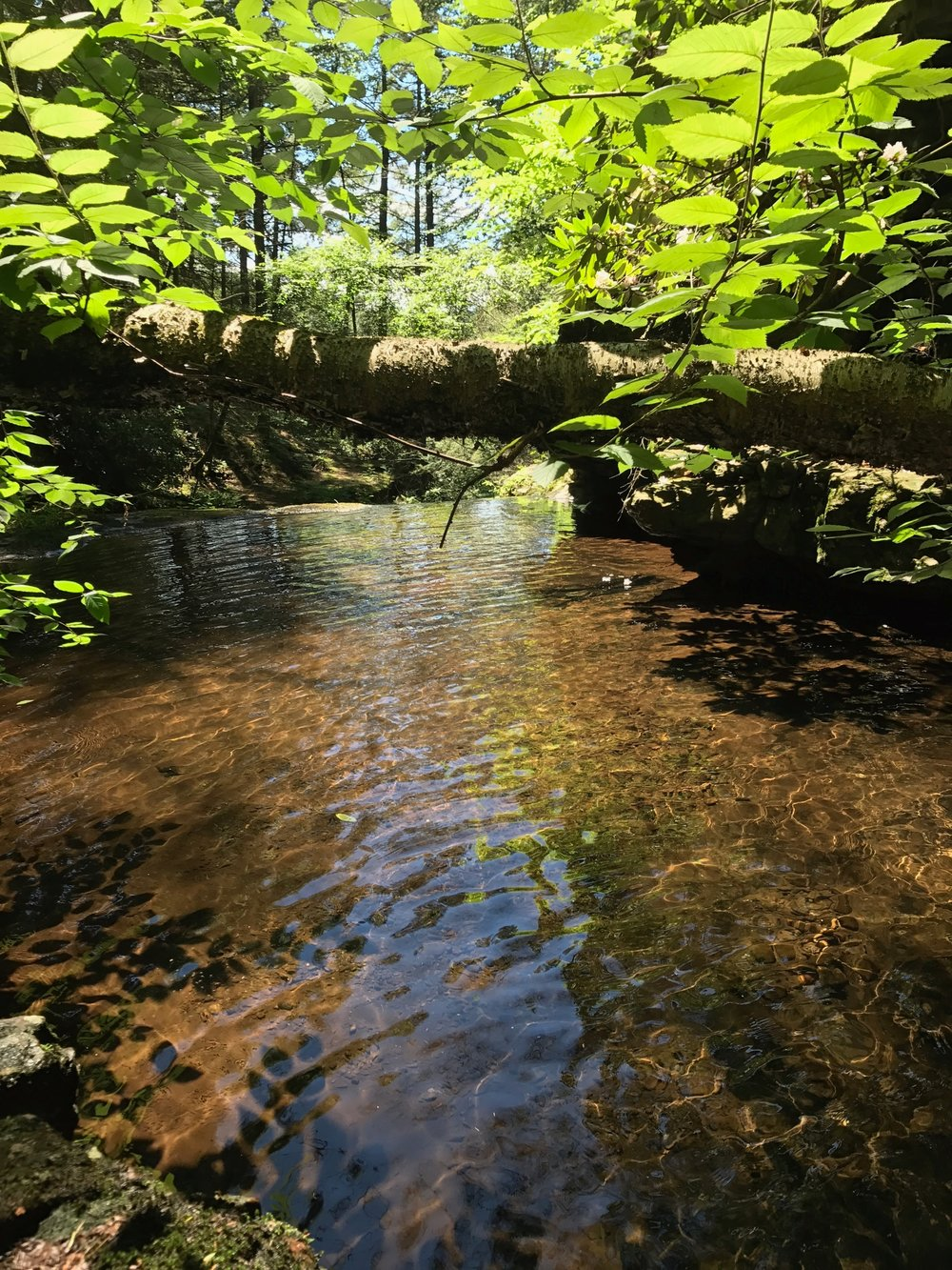 Giggles Falls; Sarah Acker-Krzywicki, Milton Academy