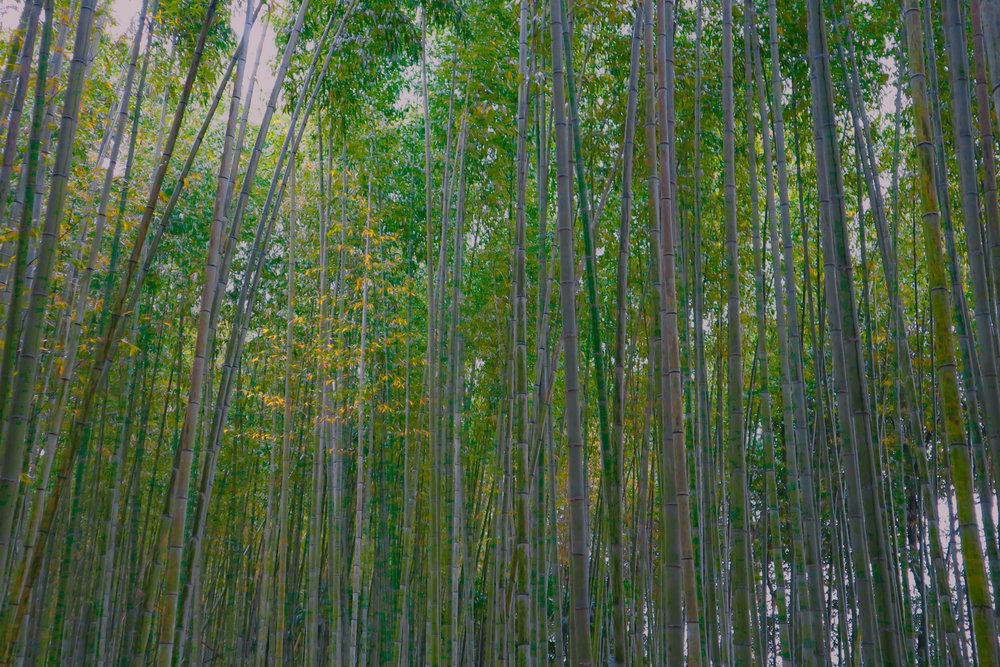 Japan Kyoto Tenryu-ji Temple Nonomiya Shrine Arashiyama Bamboo Grove