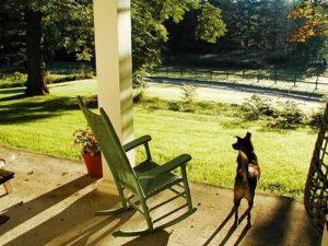 Kith Sky dog on porch1(1)