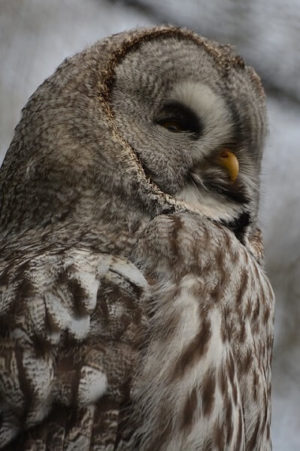 owl-1304221_960_720screech(1)