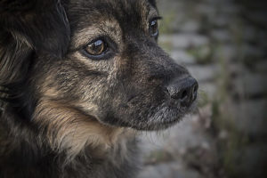 dogs-1150013_6401