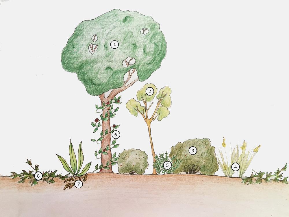forestlayer.jpg