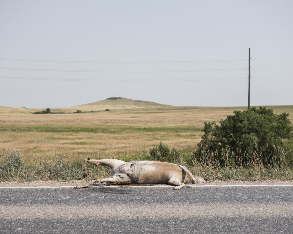 Roadkill, Oil Country, 2017