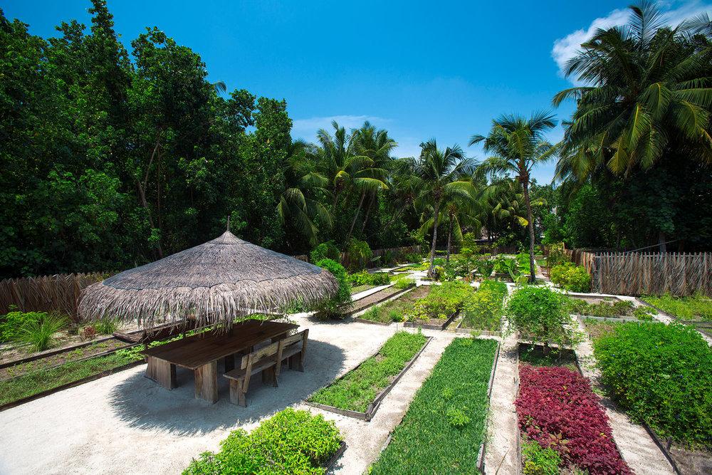 GLM_Organic-Garden.jpg