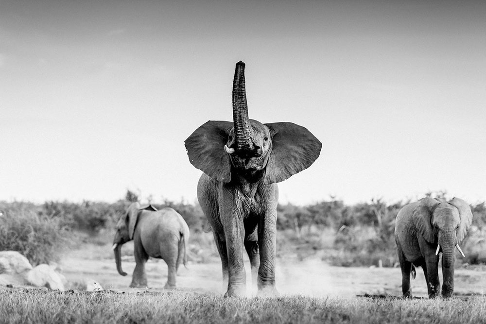 Jamala-Madikwe-Royal-Safari-Lodge_Elephant.jpg