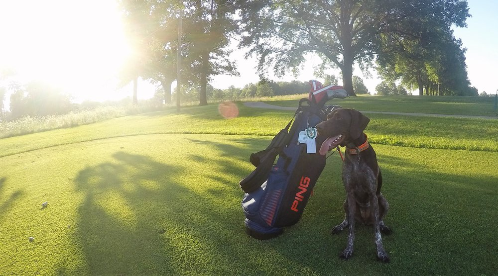 Penny in a rare still moment after a driving range session.