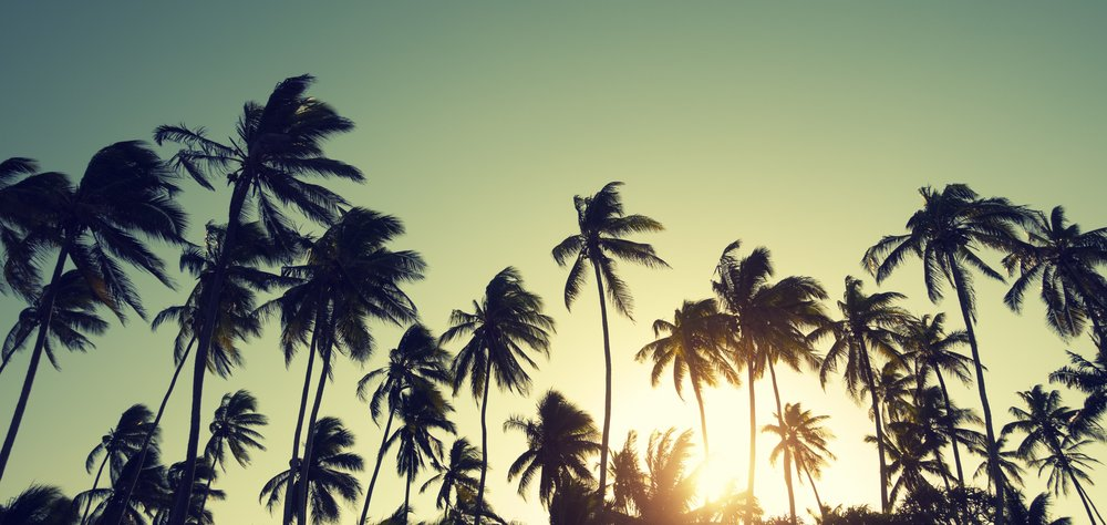 palm_trees_naples_wide.jpg