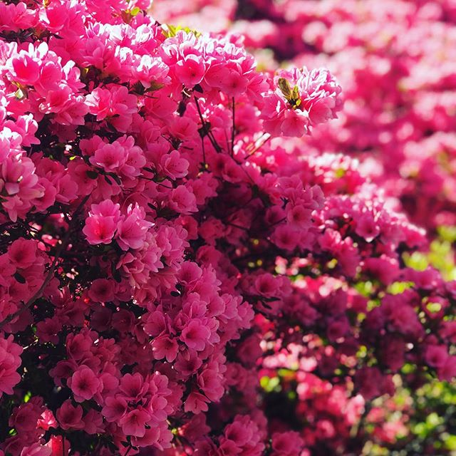 Spring has sprung 🌸
