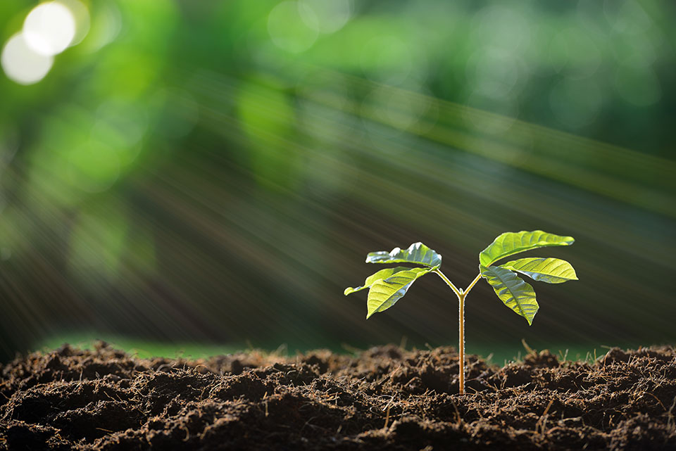 Wood Flour & Soil Additives