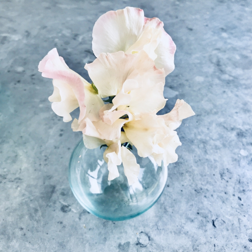sweetie in vase.jpg