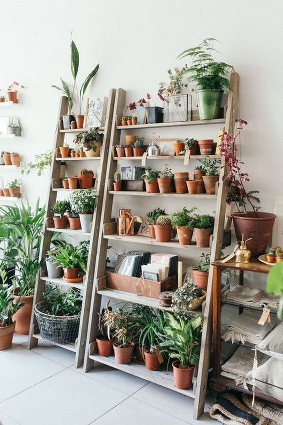 how to arrange plants on a book shelf by Urban Outfitters