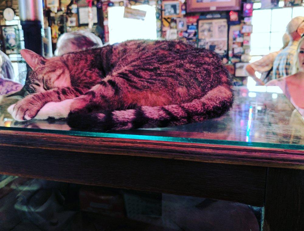 Luckenbach cat
