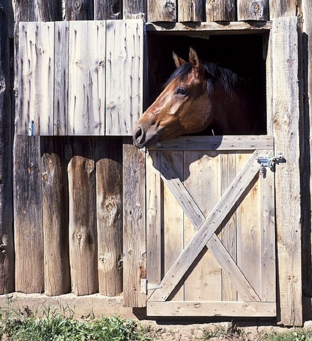 404 page - horse looking out stall door