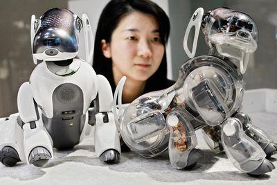 aibo-robot-dog-1.jpg