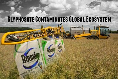 glyphosate-contaminates-global-ecosystem-800x534.jpg