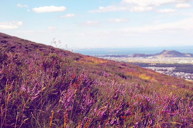 I hear Mercury isn't in retrograde anymore. So can someone please enlighten me as to why this week has been so DUMB? In the meantime, a purple field. Arthur's Seat!