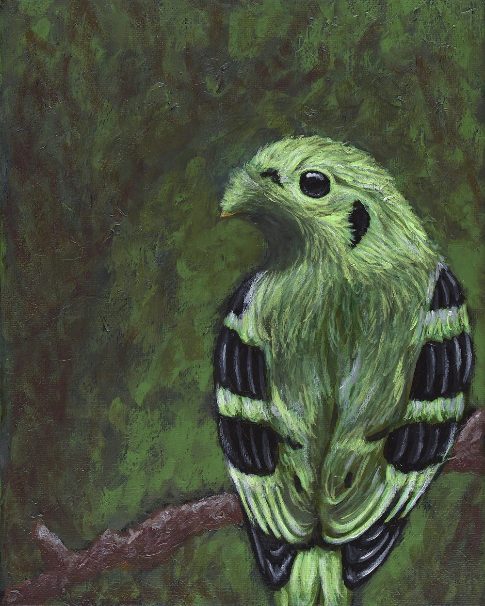 "Calyptomena viridis  Green Broadbill Acrylic on 8""x10"" canvas   Prints available"