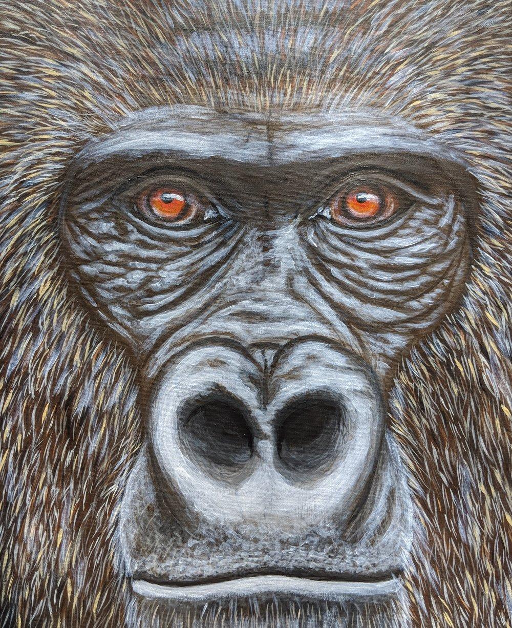 """Gorilla gorilla gorilla  Western Lowland Gorilla Acrylic on 16""""x20"""" canvas"""