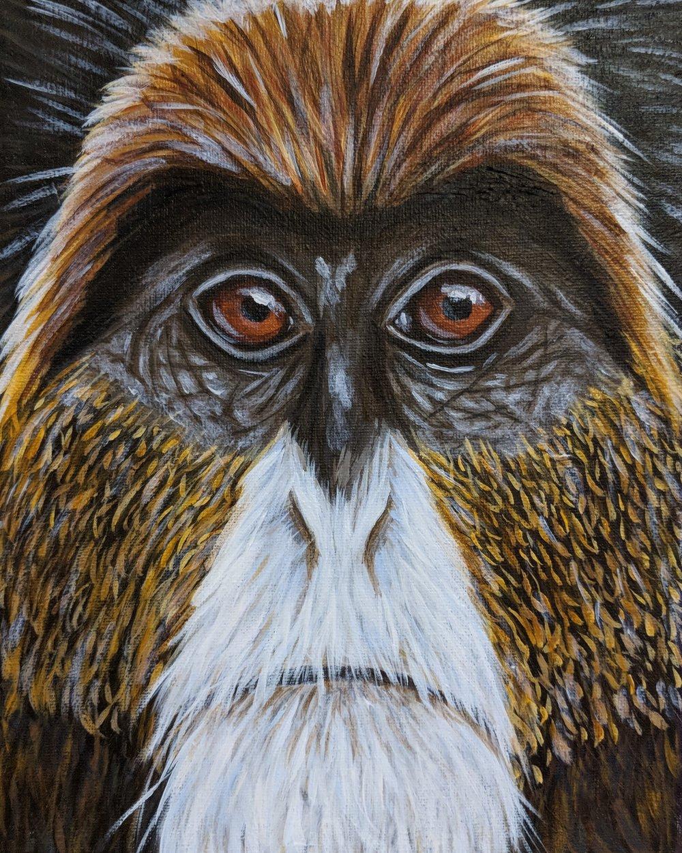"""Cercopithecus neglectus  DeBrazza's Monkey Acrylic on 8""""x10"""" canvas"""