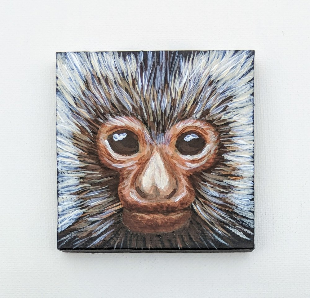 "Callibella humilis  Black-crowned Dwarf Marmoset Acrylic on 3""x3"" canvas"