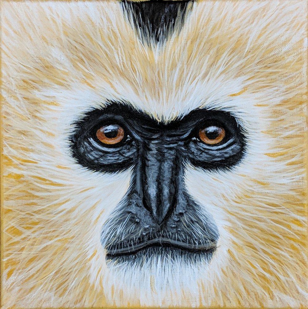 "Nomascus leucogenys   Northern White-cheeked Gibbon Acrylic on 10""x10"" canvas"