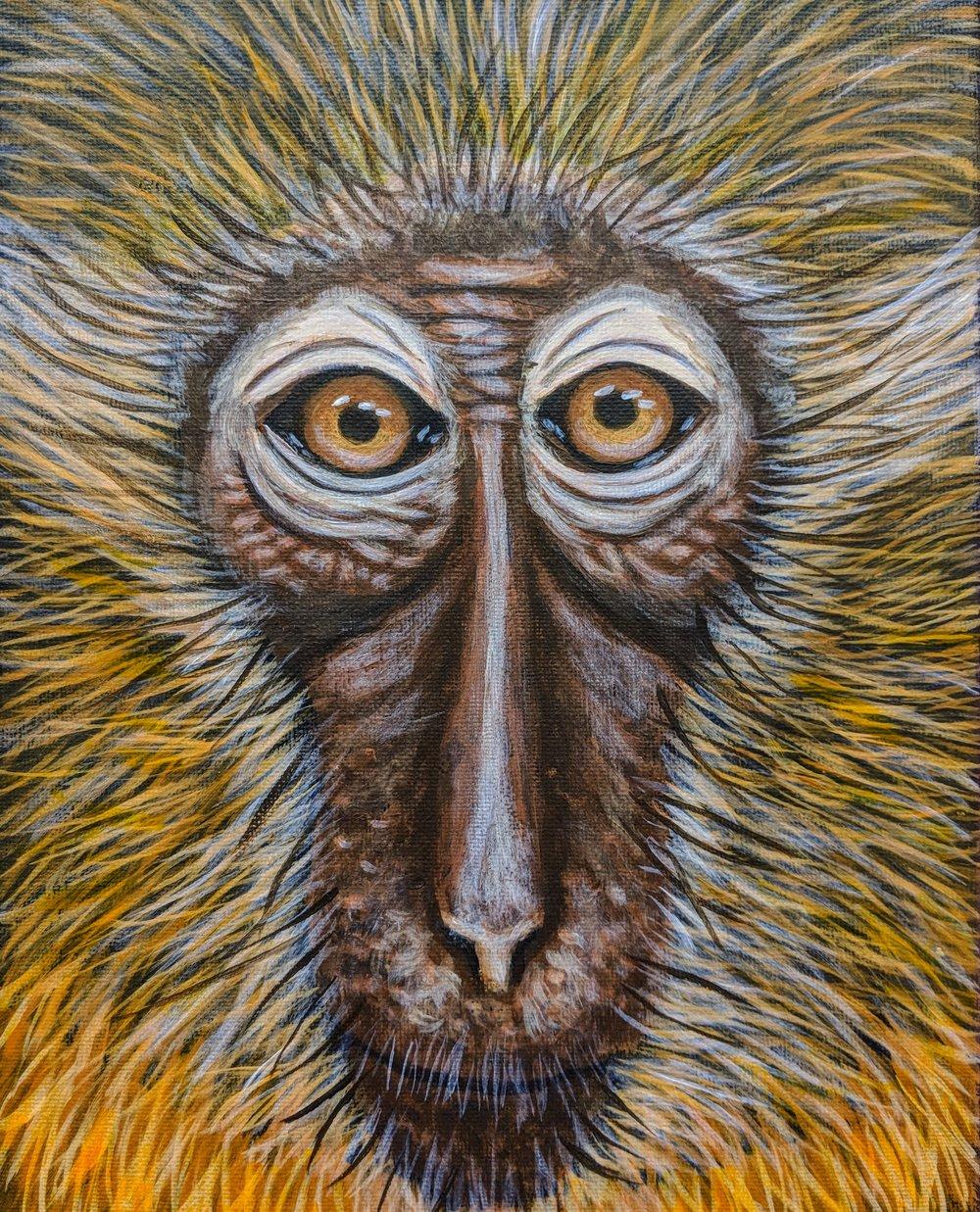 "Cercocebus chrysogaster  Golden-bellied Mangabey Acrylic on 8""x10"" canvas"
