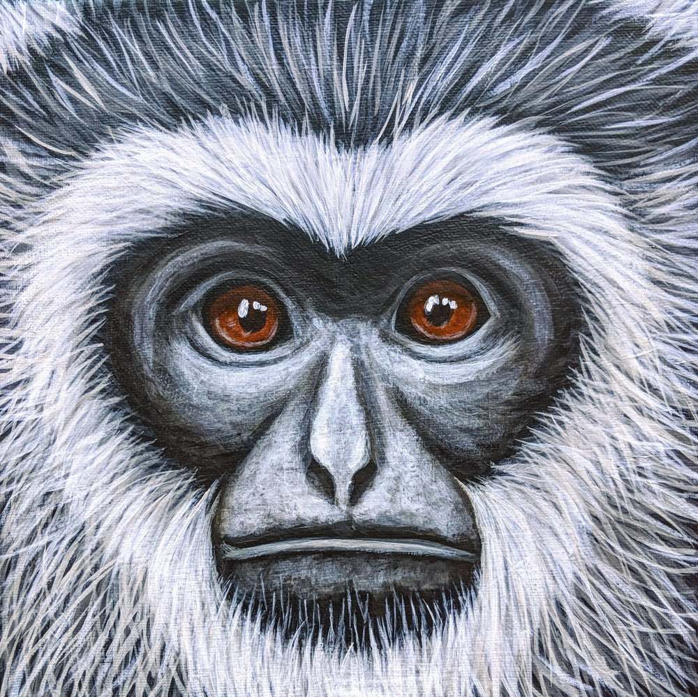 """Hylobates moloch  Javan Gibbon Acrylic on 10""""x10"""" canvas"""
