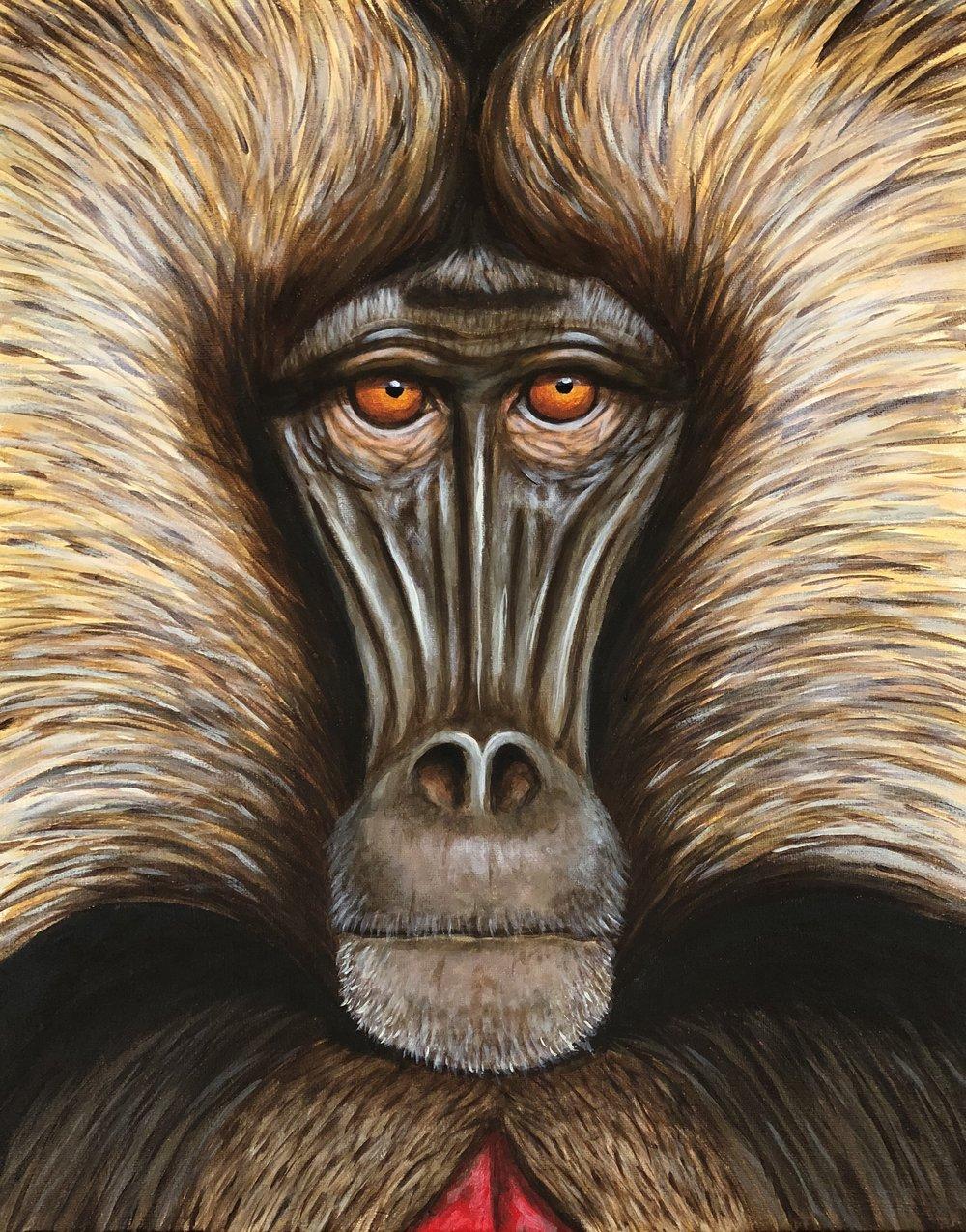 "Theropithecus gelada  Gelada Acrylic on 16""x20"" canvas"