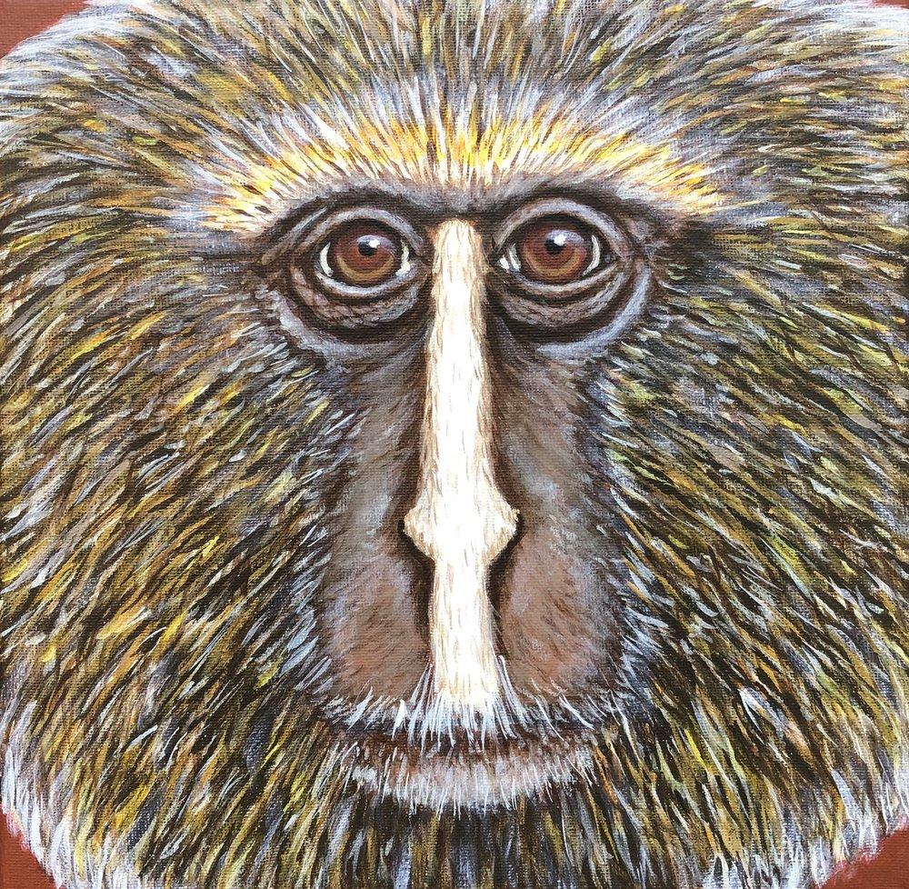 """Cercopithecus hamlyni  Owl-faced Monkey Acrylic on 10""""x10"""" canvas"""