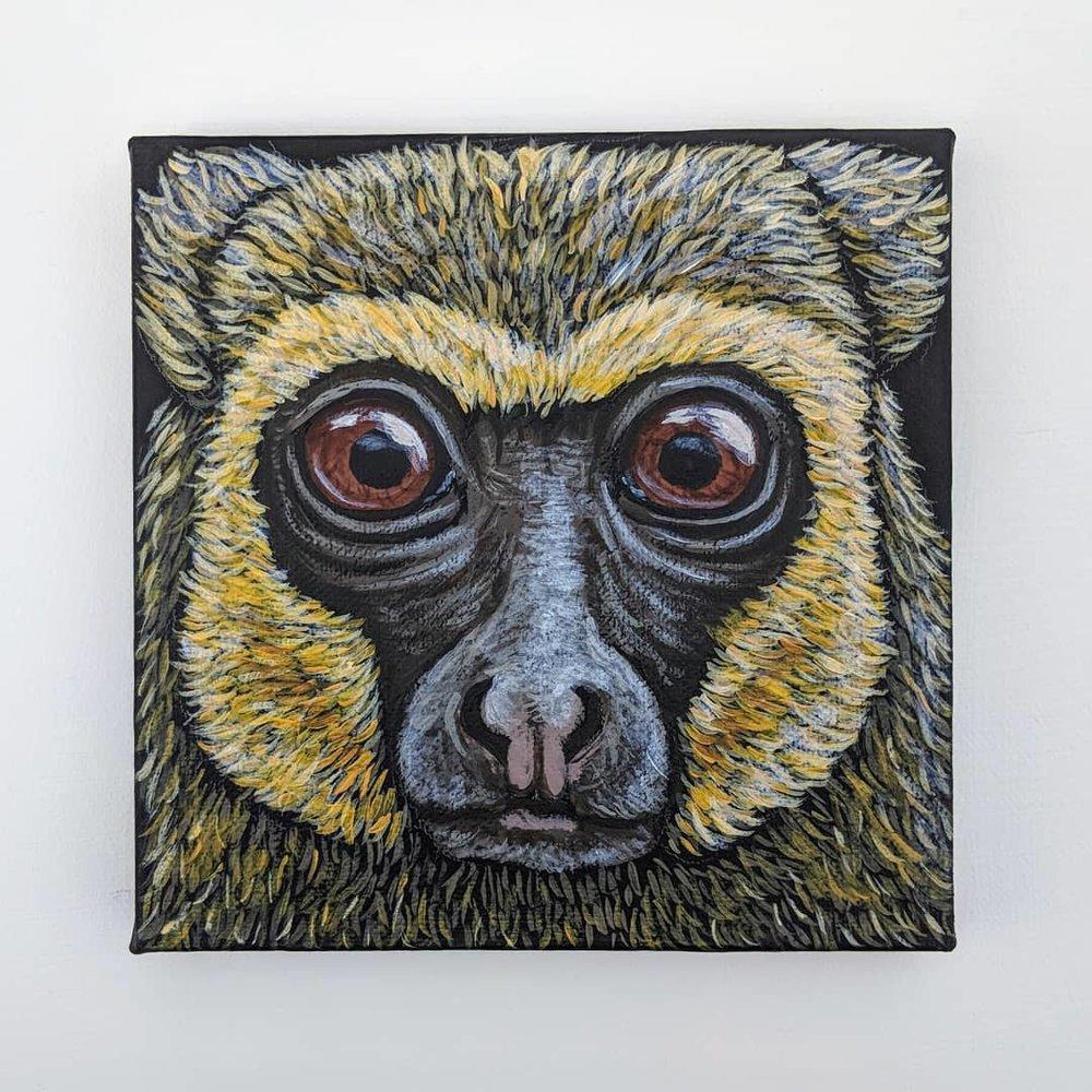 "Hapalemur aureus  Golden Bamboo Lemur Acrylic on 6""x6"" canvas"