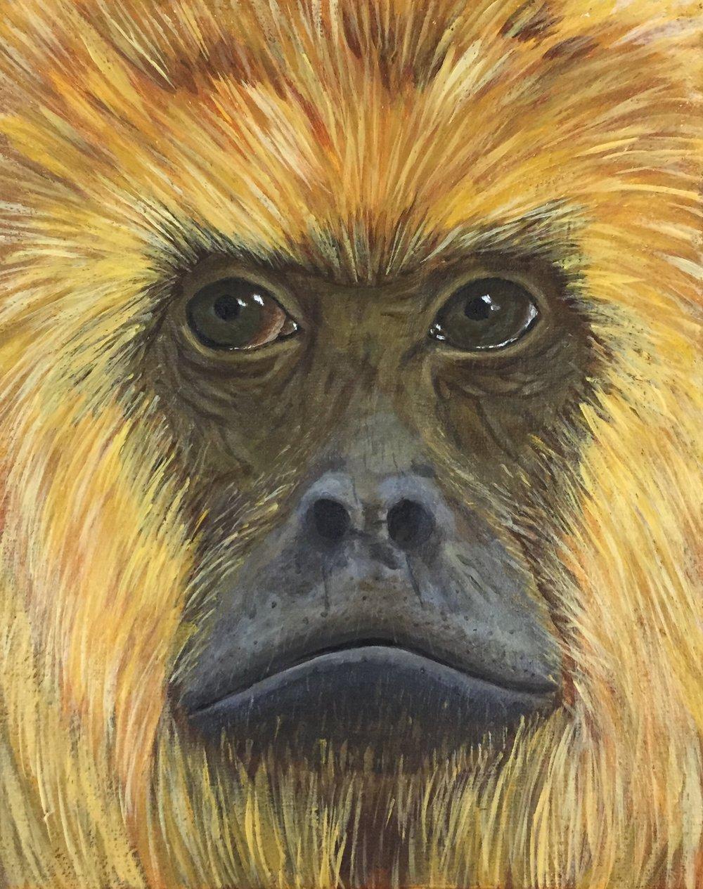 "Alouatta caraya  (female) Black Howler Monkey Acrylic on 8""x10"" canvas"
