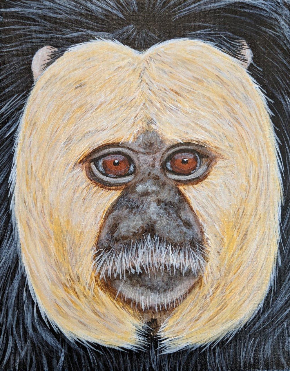 """Pithecia pithecia  White-faced Saki Monkey Acrylic on 8""""x10"""" canvas"""