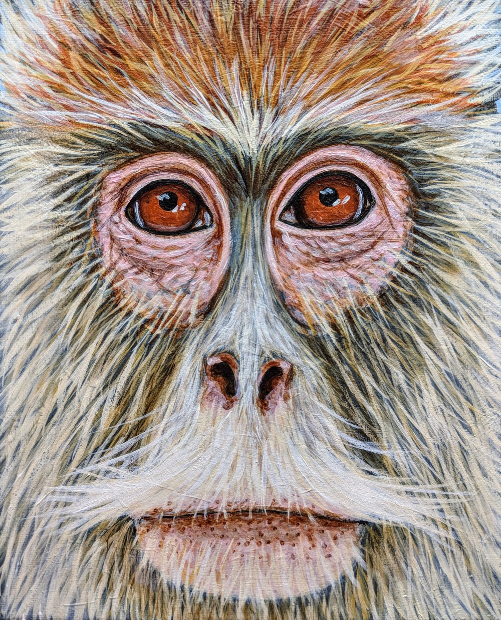 "Erythocebus patas  Patas Monkey Acrylic on 8""x10"" canvas"