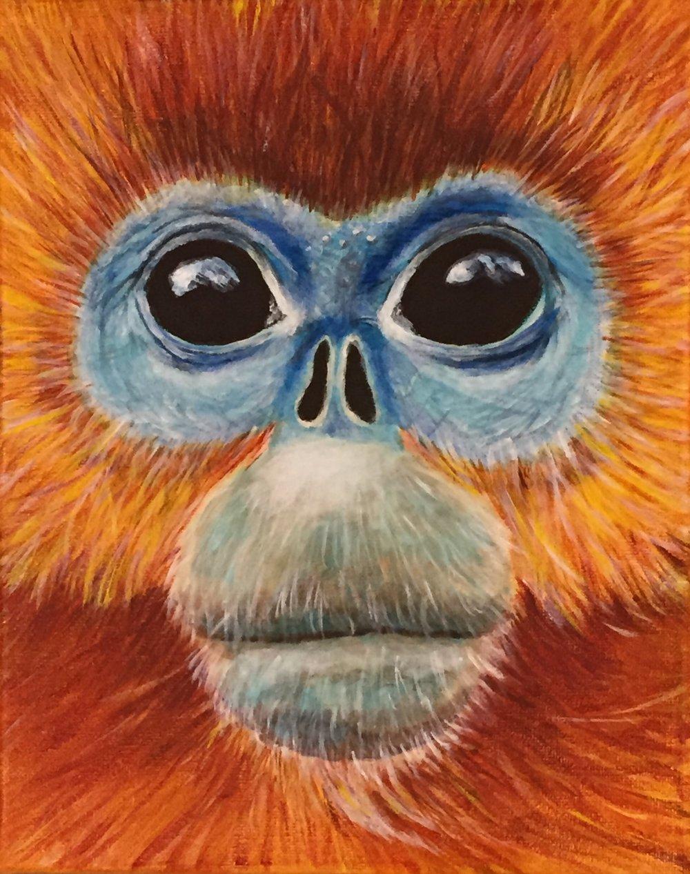 "Rhinopithecus roxellana  Golden Snub-nosed Monkey Acrylic on 8""x10"" canvas"