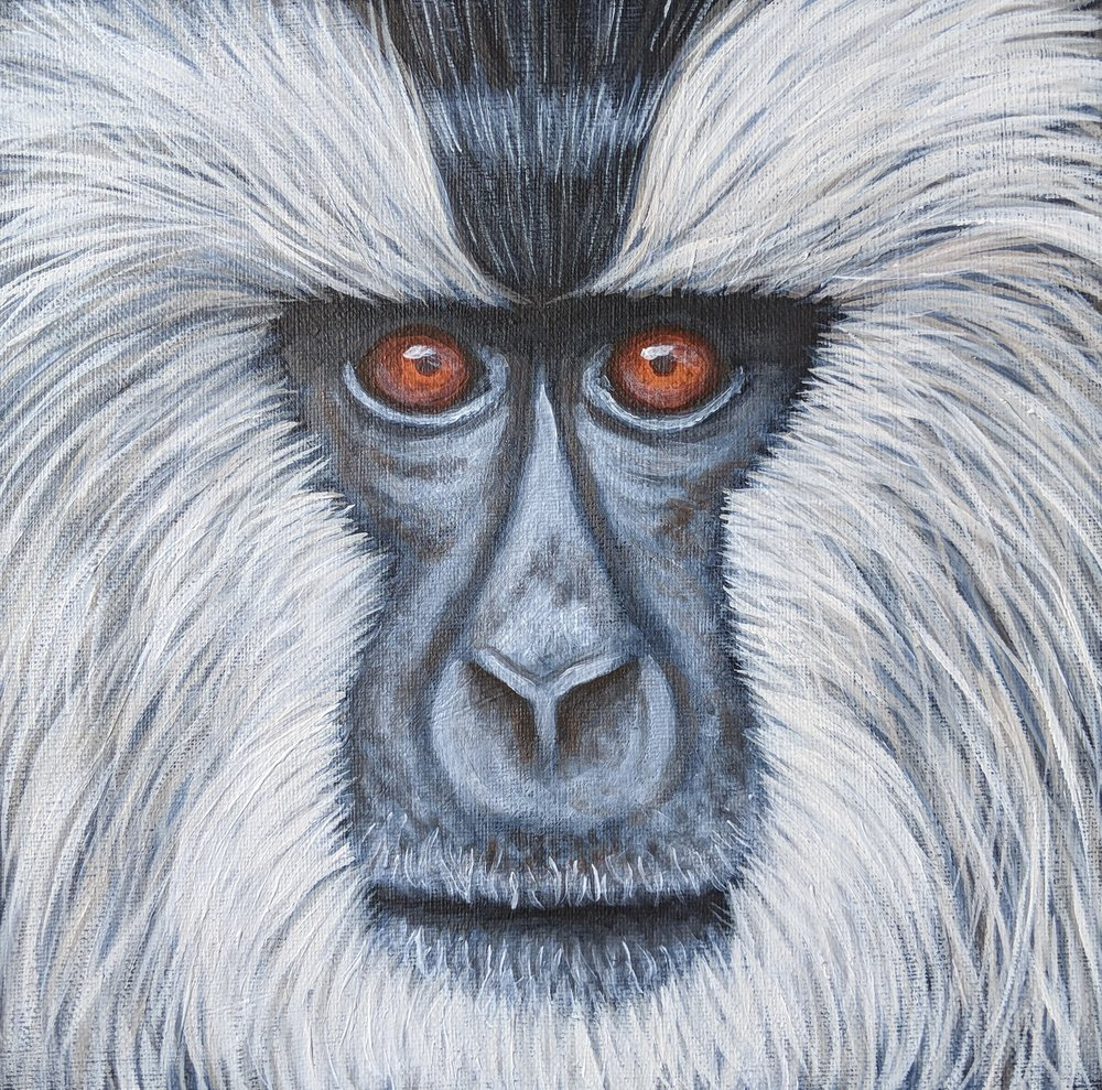 """Macaca silenus  Lion-tailed Macaque Acrylic on 10""""x10"""" canvas"""