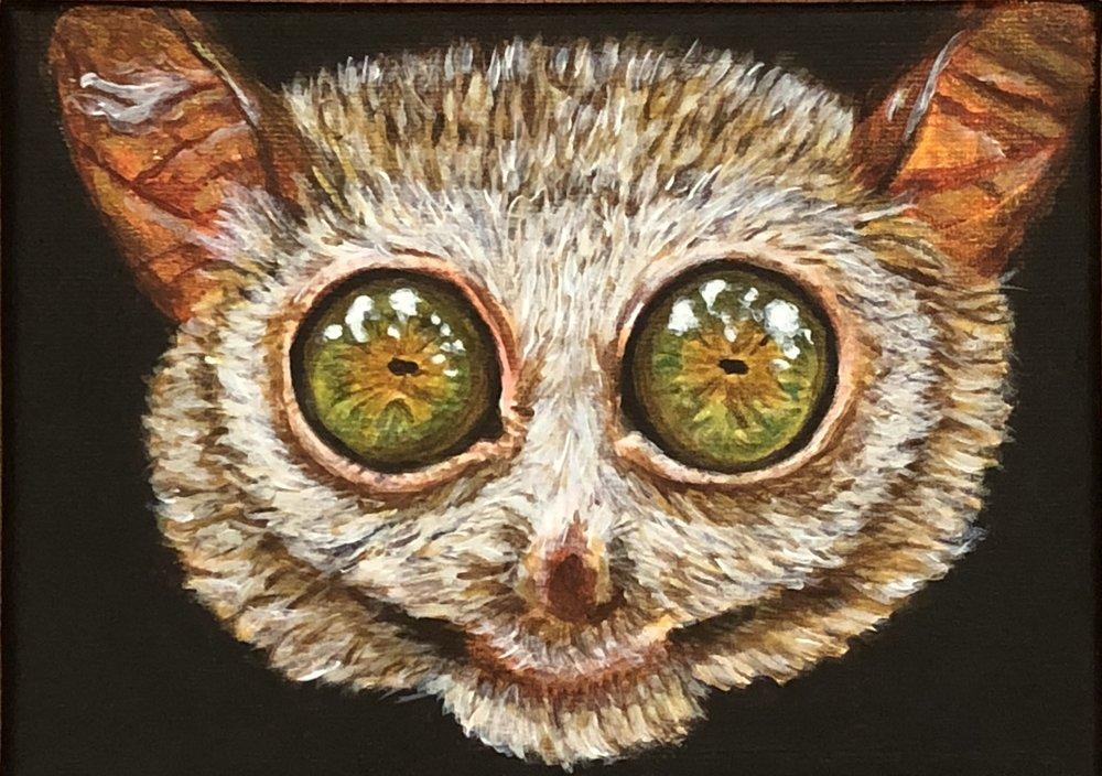 "Carlito syrichta  Philippine Tarsier Acrylic on 7""x5"" canvas"