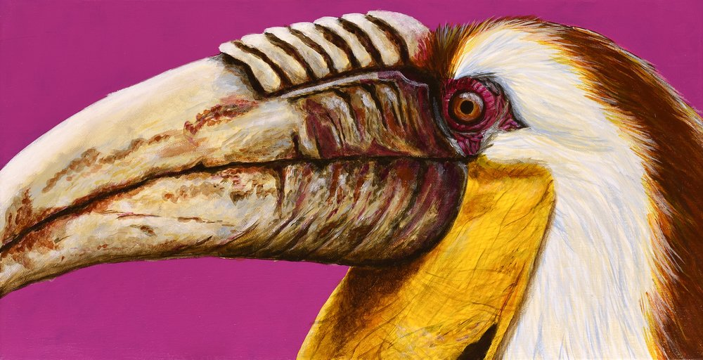 "Rhyticeros undulatus  Wreathed Hornbill Acrylic on 20""x10"" canvas   Prints available"