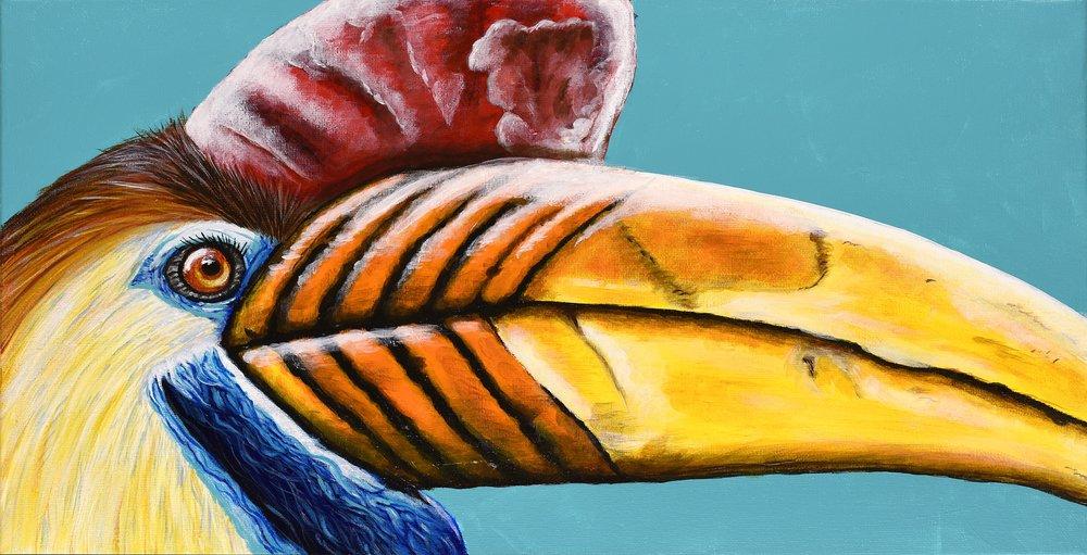 """Aceros cassidix  Knobbed Hornbill Acrylic on 20""""x10"""" canvas   Prints available"""