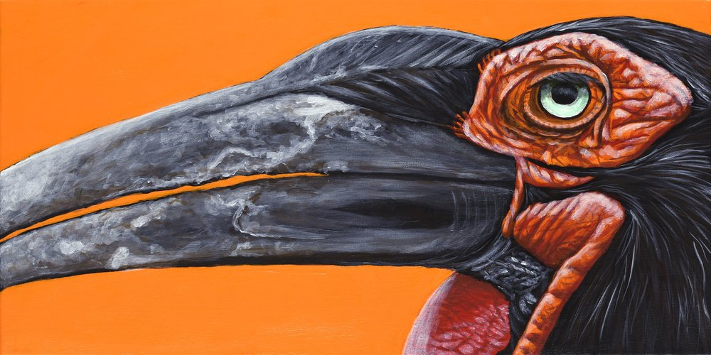 """Bucorvus leadbeateri  Southern Ground Hornbill Acrylic on 20""""x10"""" canvas   Prints available"""
