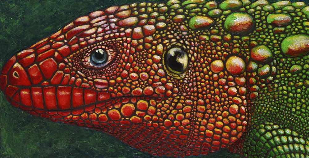 "Dracaena guianensis   Northern Caiman Lizard Acrylic on 30""x15"" canvas   Prints available"