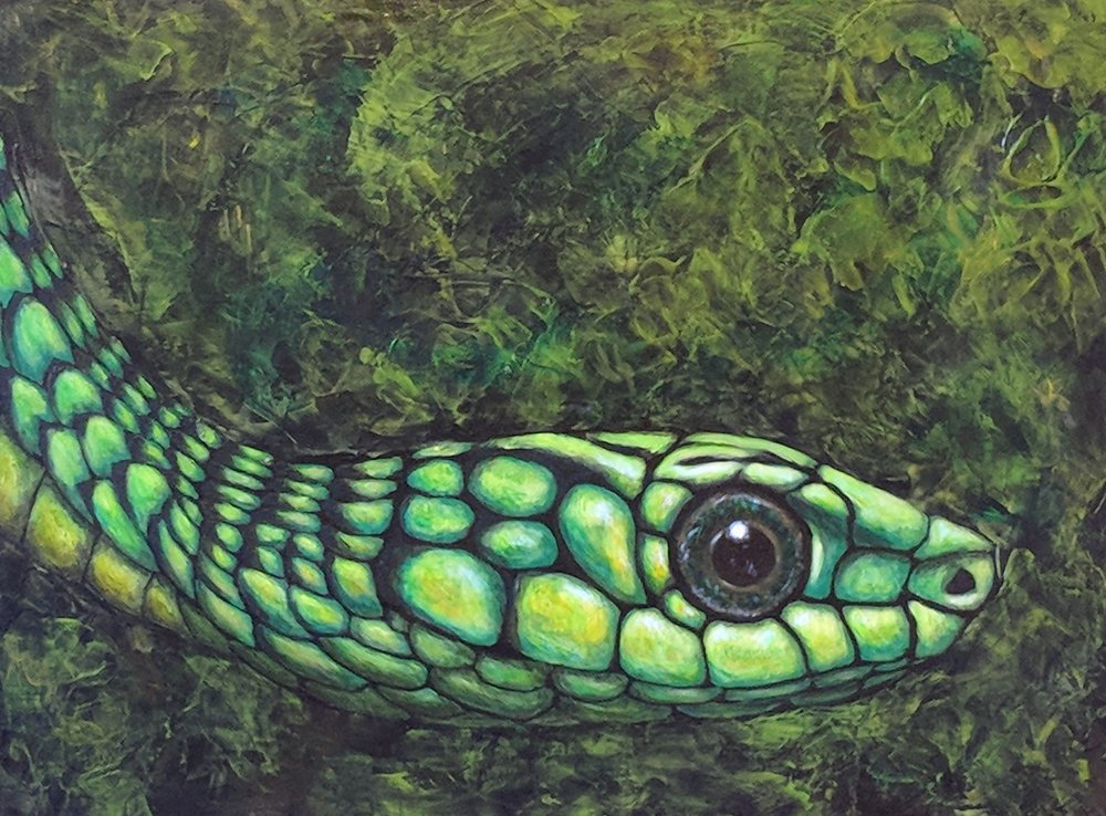 "Dispholidus typus  Boomslang Acrylic on 24""x18"" canvas"