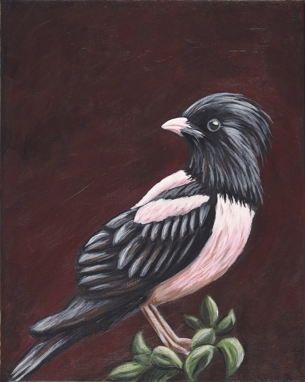 """Pastor roseus  Rosy Starling Acrylic on 8""""x10"""" canvas"""